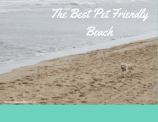 The Best Dog Friendly East Coast Beach in Florida