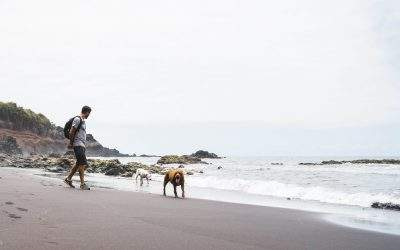 Your About to Discover How to Have Fun with Your Dog in Carlsbad Beach Ca